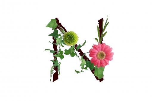アルファベット ローマ字 英文字 文字 植物 花 グリーン ガーベラ アイビー テクスチャ 素材