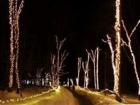 明かり 灯り 樹 クリスマス 小道 散策 夜 冬 ライトアップ 田舎 カントリー 電飾 木 遊歩道 デート 雪 雪道 長野県 信州 夜道 公園 進む 光り 照らす 前方 季節 夜空 暗い 林道 森