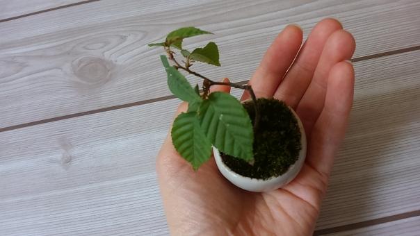 手乗り 盆栽 手のり 緑 葉っぱ グリーン 夏 小さい 小さな コケ こけ 苔 自然 植物 女性 手 指