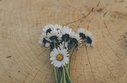 束 集まった 小さい 小さな 白 白い 点々 散らばった 花のみ ガーデン 庭 植物 公園 リーフ 花 花びら 花弁 被子植物 フラワー 春 夏背景 風景  初夏 リラクゼーション リラックス 癒し いやし 涼しい 涼しげ 爽やか さわやか 綺麗 きれい 美しい 素敵 可愛い かわいい 明るい ナチュラル  自然 ネイチャー 幻想 幻想的 不思議 ファンタジック ファンタスティック ファンタスチック ドリーミー  夢幻 夢幻的 空想 空想的 天然 壁テクスチャ  テクスチャー 壁紙 フレーム 枠 素材 小物 雑貨 背景 ウッド ウッド素材 板 木 木目 デザイン素材 バック バックグラウンド