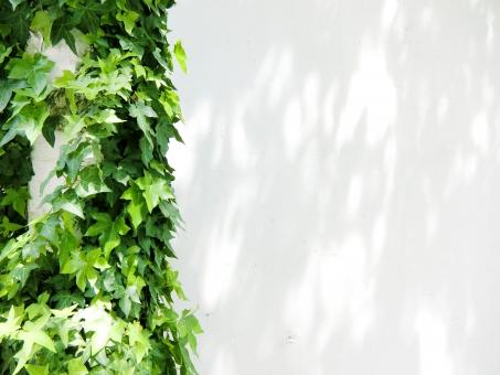 自然 植物 樹木 木 葉っぱ 木の葉 新緑 緑 グリーン 初夏 夏 爽やか クリーンイメージ 木漏れ日 光 コピースペース 白 白壁 ポスター チラシ dm 透過光 待ち受け ポストカード マイナスイオン 清潔感 澄んだ空気 若葉 眩しい テクスチャー 5月 森 壁 壁紙 カフェ テクスチャ インテリア 店舗 ショップ ナチュラル アンティーク 板 diy 日曜大工 おしゃれ クリスマス 雑貨 ダメージ加工 ベージュ ウォール ウッド 年輪 リメイク リノベーション 温もり フローリング ぬくもり ログハウス 木目 レンガ 煉瓦