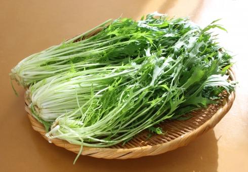 みずな 水菜 キョウナ きょうな 京菜 Mizuna mizuna MIZUNA 野菜 植物 葉 しゃきしゃき シャキシャキ サラダ さらだ 鍋 なべ ナベ 食材 材料 レシピ 癖がない 栄養 栄養価 豊富 緑 グリーン 健康 効能 効果