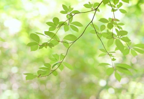 みどり 新緑 葉 木漏れ日 若葉 青葉 壁紙 素材 コピースペース テキストスペース キラキラ 爽やか さわやか 明るい 庭 光 5月 6月 清々しい 公園 涼しい 涼しげ 涼感 清涼感 ソフト 葉っぱ 木の葉 はっぱ 小枝 自然 風景 木 樹木 森 植物 グリーン エコ エコロジー 環境 eco 森林 森林浴 いやし リラックス リラクゼーション やすらぎ 安らぎ マイナスイオン 健康 美容 背景 背景素材 テクスチャ テクスチャー 5月 夏 緑 春 初夏 癒し きらめき キラメキ 優しさ やさしい 優しい 揺らぎ 風 空気 そよ風 バックイメージ バックグラウンド バック 医療 イメージ