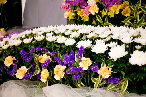 遺影 線香 お別れ会 惜しむ会 別れ 手を合わせる ご霊前 焼香 さびしい 灰 葬儀 葬儀場 葬式 白菊 菊 白 告別式 通夜 葬儀のイメージ 植物 花 コピースペース バックグラウンド 葬儀イメージ 死 悲しみ 祭壇 紫の花 紫 蕾 つぼみ 咲く 終活 思い 寂しさ