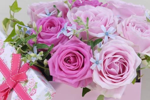 ブルースター 水色 小物 雑貨 リボン おめでとう アロマ 壁紙 バレンタイン ウェディング 感謝 恋 記念日 ピンク 秋 ブーケ 結婚 結婚式 グリーティングカード 5月 リラックス リラクゼーション くつろぎ 幸せ 幸福 愛 恋愛 女性 やわらかい ソフト マクロ アップ クローズアップ かわいい 可愛い ギフト 母の日 父の日 緑 植物 初夏 5月 6月 五月 六月 メッセージ カード フラワーアレンジ 行事 春 バラ ばら 薔薇 花 華やか 綺麗 きれい 贈り物 美 美しい 美容 アレンジ 花束 バースデー 誕生日 プレゼント 背景 バック 素材 背景素材 背景写真 ローズ フラワー 花びら バックグラウンド 明るい エステ イメージ アレンジメント 癒し いやし 健康 お見舞い お祝い