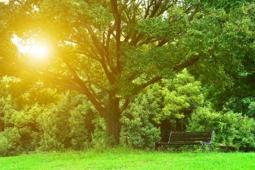 枝 あでやか あざやか 鮮やか 美しい 美 キレイ きれい 綺麗 壁紙 かべがみ 背景 テクスチャ 植物 背景素材 レジャー 風景 木 樹 木々 葉っぱ 葉 自然 小道 散歩 ふんわり 旅 旅行 樹木 幹 ぼやける ピンぼけ 空 花びら つぼみ 山 野草 景色 素材 美し リラクゼーション リラックス 癒し 癒す セラピー インスピレーション 爽やか 落ち着き 画像 壁紙画像 5月 6月 7月 8月 9月 晴れ 晴 晴天 快晴 カウンセリング コーチング 森 林 青葉 大自然 季節 風情 情緒 フレーム 花 緑 黄緑 黄色 黄 紅葉 きらきら キラキラ 京都 公園 日本 光 木漏れ日 太陽 日の光 幻想 幻想的 観光 オレンジ 絶景 椅子 チェア いす 木材 木造 穏やか 安らぎ やすらぎ おだやか 休日 子供