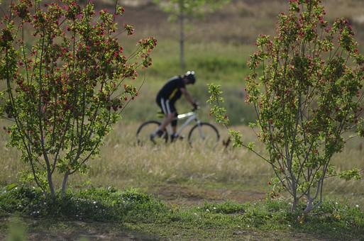 自転車 じてんしゃ サイクリング ロードバイク 男性 人物 スポーツ 運動 乗り物 トレーニング 屋外 サイクルウェア 自然 練習 トライアスロン 自然 植物 景色 広場 ヘルメット タイヤ マウンテンバイク アウトドア 趣味