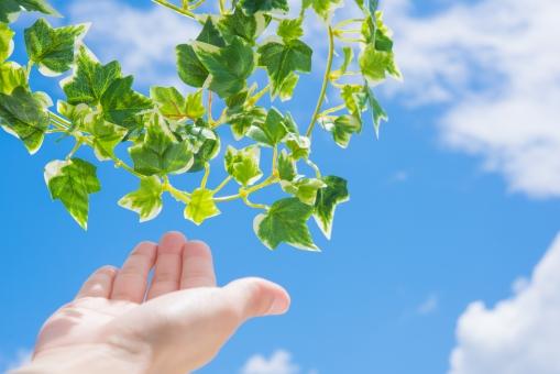 若葉 グリーン 女性 手 青空 空 雲 太陽 爽やか さわやか コピースペース 春 リラクゼーション リラックス 緑 青 ブルー 水色 夏 秋空 葉 風景 初夏 光 明るい イメージ 健康 清々しい みどり 背景 壁紙 背景素材 自然 テキストスペース 植物 樹木 木 素材 バック バックグラウンド 背景写真 葉っぱ 景色 新緑 クリーン リフレッシュ 鮮やか