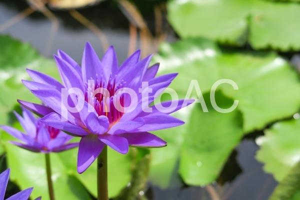 青い池の花の写真