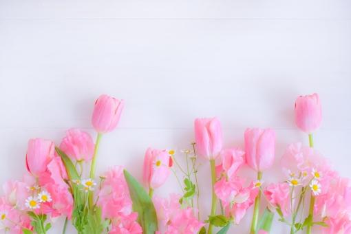 tulip チューリップ スイートピー sweet pea マトリカリア ピンク ピンク色 ピンクの花 春 ホワイトスペース メッセージカード メッセージボード 文字入れ 庭 ふんわり ふわり わいわい ガヤガヤ メッセージ ギフトカード グリーティングカード 女性的 女性