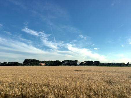 小麦畑の大地の写真