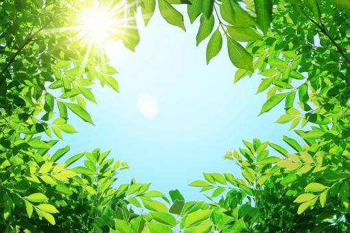 空 青空 夏空 紫外線 太陽光 光 木漏れ日 キラキラ テクスチャ 眩しい まぶしい 日焼け 日差し 陽光 暑い 爽快 晴れ 天気 快晴 明るい 背景 夏 汗ばむ 避暑 涼む リゾート 木の下 木の枝 葉 葉っぱ 水色 青 風景 植物 新緑 若葉 緑 グリーン 屋外 枠 フレーム 真夏日 猛暑 暑中見舞い トンネル 繁る 繁殖 新鮮 フレッシュ 元気 活発 活力 盛りだくさん 輝く きらめき 林 シマトネリコ 森林 森 緑のトンネル バックグラウンド トロピカル 南国 南国風 ポストカード コピースペース テキストスペース 熱中症 日光