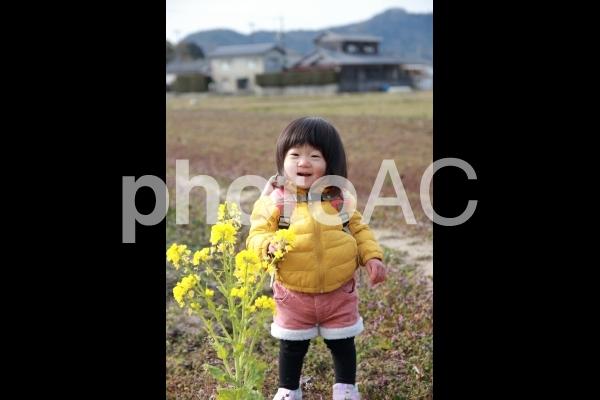 菜の花観察の写真