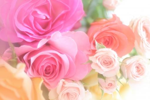 バラの花束イメージ 11の写真