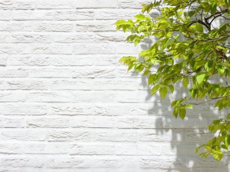 自然 植物 樹木 木 葉っぱ 木の葉 新緑 緑 グリーン 初夏 夏 爽やか クリーンイメージ 木漏れ日 光 透過光 待ち受け ポストカード マイナスイオン 清潔感 澄んだ空気 若葉 眩しい テクスチャー 5月 森 壁 壁紙 カフェ テクスチャ インテリア 店舗 ショップ ナチュラル アンティーク 板 diy 日曜大工 おしゃれ  雑貨 ダメージ加工 ベージュ ウォール ウッド 年輪 リメイク リノベーション 温もり フローリング ぬくもり ログハウス 白壁 木目 レンガ 煉瓦 白 コピースペース