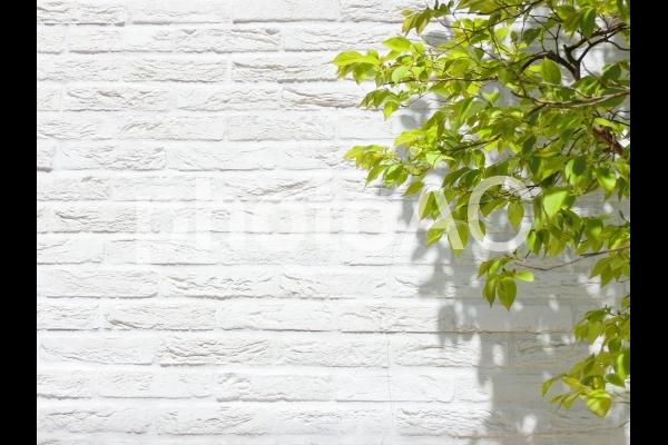 白いレンガの背景と新緑の木の写真
