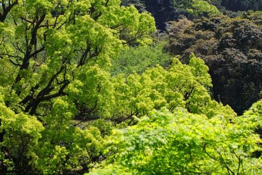 5月 花 植物 横位置 余白 公園 花壇 緑 若葉 風 薫風 4月 春 初夏