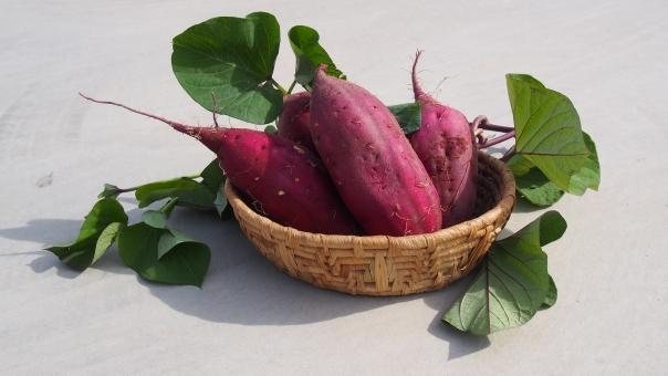 さつまいも さつま芋 サツマイモ 薩摩芋 野菜 収穫 畑 家庭菜園 農業 農作物 食べ物 かご カゴ 籠 バスケット vegetable sweet_potato basket 紅あずま 秋 autumn