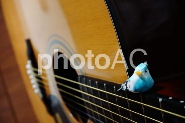春の鳥とギターの写真