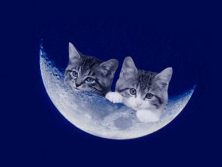 ブルームーン(月齢4.0)と子猫ちゃん(PSD)の写真