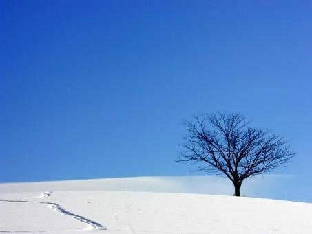 孤木03の写真