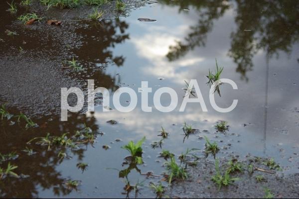 水たまり その3の写真