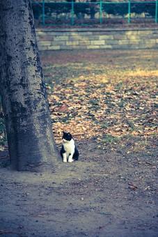 動物 生き物 生物 哺乳類 猫 ネコ ブチネコ 白 黒 小さい 可愛い 公園 樹木 枯れ葉 落ち葉 フェンス 広場 街並み 町並み 暮らし 日常 生活 風景 景色 トイフォト トイカメラ トイデジ