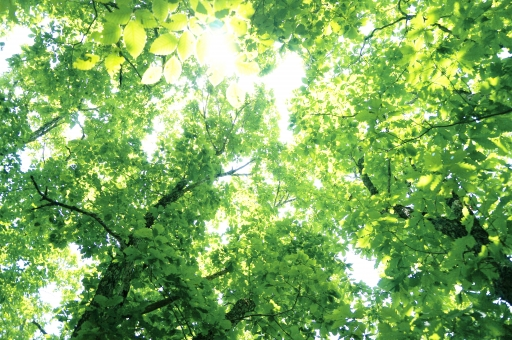 森林の緑の背景(こもれび)の写真