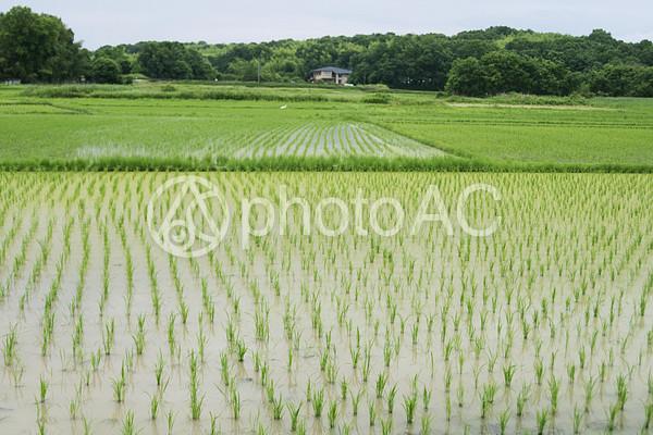 水田の風景の写真