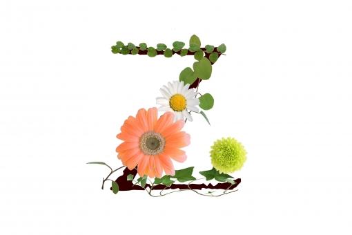 アルファベット ローマ字 英文字 文字 植物 花 グリーン ガーベラ テクスチャ 素材
