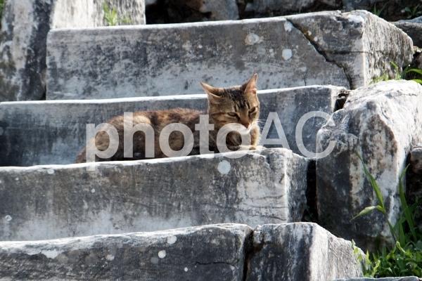 遺跡と猫2の写真