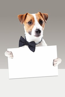 ポーズ 動物 生物 生き物 哺乳類 ほ乳類 犬 いぬ イヌ ドッグ ジャックラッセルテリア 小型犬 仔犬 子犬 蝶ネクタイ ボウタイ フリップ ホワイトボード 紙 持つ かわいい 可愛い 白背景 白バック グレーバック 正面 十二支 干支 戌