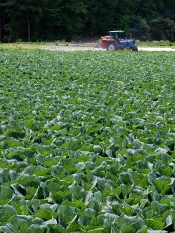 緑 高原 農作業 トラクター 青 農薬 畑 露地 栽培 農業 農地 圃場