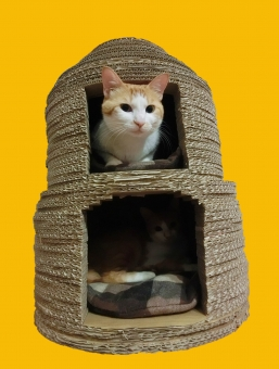 猫 ネコ 愛猫 ねこ ネコベッド 猫ベッド 猫の家 にゃらん 白 茶 顔 寝そべる 親子 くつろぐ 顔を出す 表情 目を開けた ピンクの鼻 ペット 家猫 飼い猫 室内猫 動物 かわいい 顔を出す 座った 加工 オレンジ キャットハウス 段ボール