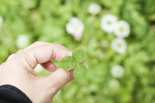 葉 葉っぱ 緑  自然 植物 屋外 環境 エコ  さわやか 爽やか 若葉 クローバー シロツメクサ 三つ葉 三ッ葉 手 ハンドパーツ ゆび 持つ 野草 野生 雑草 花 白い花 アップ シロツメグサ