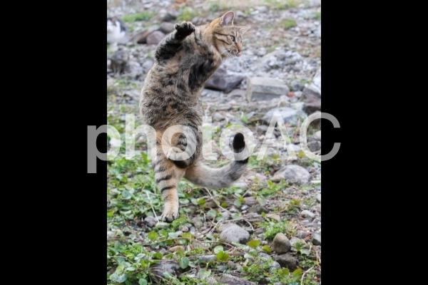 踊る猫の写真