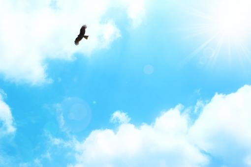 空 青空 大空 屋外 バック 素材 爽快 雲 テクスチャ バックグラウンド 背景 壁紙 背景素材 バックイメージ 透明感 クリア グラデーション グラフィック 鮮やか 自然 風景 風 真夏 初夏 夏 春 スカイブルー 水色 青 天空 太陽 輝き きらめき 光 まぶしい 紫外線 暑い 日中 日光 天気 晴れ 快晴 気分爽快 さわやか 景色 白 飛ぶ 羽ばたく 翔 前向き ポジティブ 挑戦 スタート 誠実 寒色 暑中見舞い はがき 葉書 ハガキ ポストカード 鳥 猛禽類 トンビ 鳶 鷹 力強い パワー 希望 若々しい 元気 テキストスペース 余白 フレーム コピースペース 酉年 年賀状 新年 旅立ち