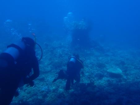 バディ ダイビング ダイバー 2人 世界遺産 グレート バリア リーフ 透明 海 青 潜水 酸素 夏 夏休み バカンス 休暇 遊び サマー スポーツ サンゴ礁 珊瑚 サンゴ オーストラリア 海外 ケアンズ 外国 背景 テクスチャ