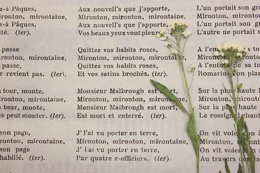 押し花 花 ドライフラワー 小花 植物  背景 背景素材 美しい かわいい 繊細な 英字新聞 楽譜 アンティーク 古い 音譜 アリッサム