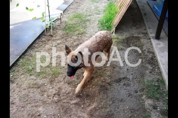 水遊びをする犬の写真