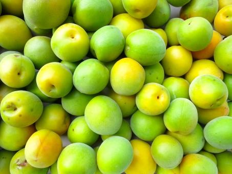 青梅 梅 梅の実 果実 うめ ウメ 梅酒 梅干し 入梅 梅雨 緑 収穫 梅仕事 横 ヨコ
