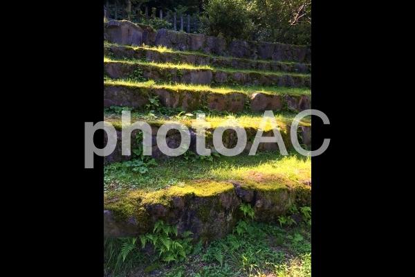 奥の細道 光の差す石段 0828の写真
