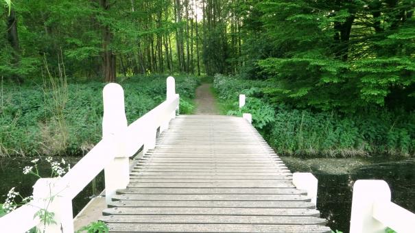 橋 架け橋 出発 スタート 始める 渡る 散歩 散歩道 森 森林 林 公園 遠足 ハイキング 小さい橋 小川 可愛い 歩く