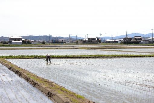 田植え風景 手作業の写真