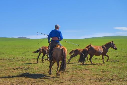 モンゴルの遊牧民と馬の写真