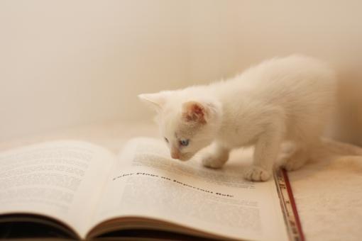 研究熱心な子猫の写真