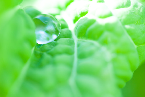 自然 植物 葉 葉っぱ 葉脈 緑 黄緑 水 水滴 水玉 雨 雫 雨粒 朝露 透明 反射 映る 光 凹凸 新緑 ぼやける ピンボケ アップ 加工 無人 室外 屋外 風景 景色 アート 幻想的