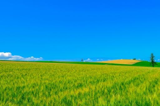 北海道!美瑛の限りなき青空を眺むるの写真