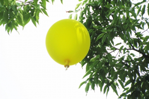 黄色い風船の写真