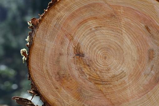 杉 木 丸太 材木 伐採 木材 年輪 癒やし 空気 自然 住宅 家 木造 林業 林 森 切り株 断面 横位置